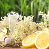 Holler Torte: Rezept für sommerliche Torte mit Holunderblütensirup